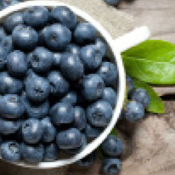 Pariani Blueberry paste
